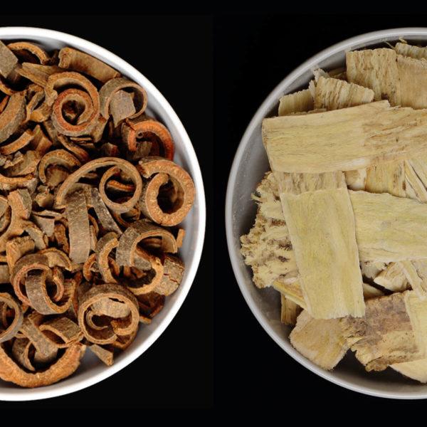 Astragalus Tee Variante 1