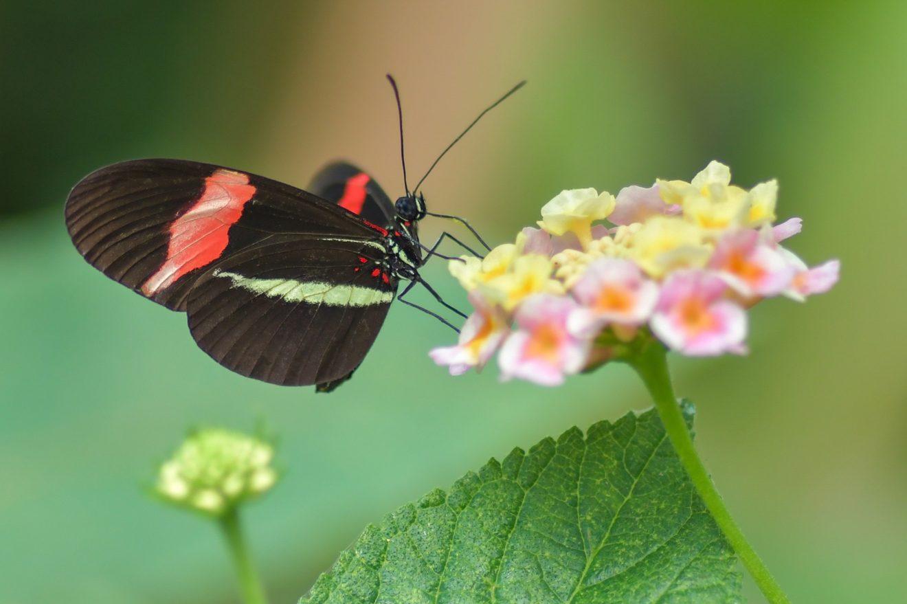 butterfly-3424840_1920